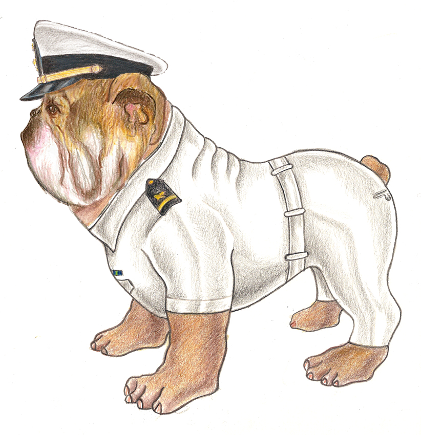 Navy School Bulldog