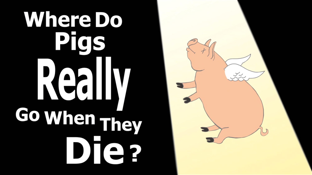 Where Do Pigs Really Go When They Die?
